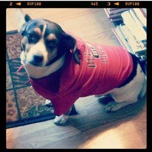 Old Navy dog hoodie